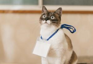 展示会ネコ